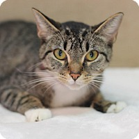 Adopt A Pet :: Moonstone - $10! - Midland, MI