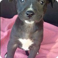 Adopt A Pet :: Delaney - Dana Point, CA
