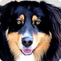 Adopt A Pet :: LUCY(A TRUE COMPANION!! - Wakefield, RI