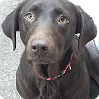 Adopt A Pet :: Chloe - Fort Worth, TX
