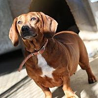 Adopt A Pet :: Sangria - Acton, CA
