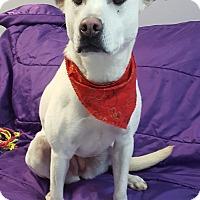 Adopt A Pet :: Becca - Hawk Point, MO