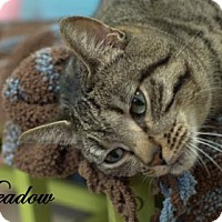Adopt A Pet :: Meadow - Middleburg, FL