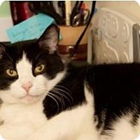 Adopt A Pet :: King - Milwaukee, WI