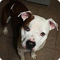 Adopt A Pet :: Lucas - Stilwell, OK