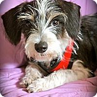 Adopt A Pet :: BIXBY - san diego, CA