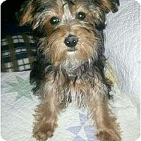 Adopt A Pet :: Buster - Hilliard, OH