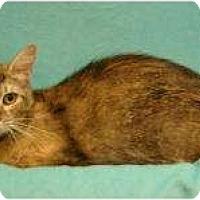 Adopt A Pet :: Lindsey - Sacramento, CA