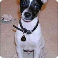 Adopt A Pet :: SPENCER - Phoenix, AZ