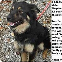 Adopt A Pet :: # 642-09 @ Animal Shelter - Zanesville, OH