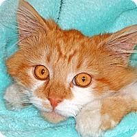 Adopt A Pet :: Titus - Renfrew, PA