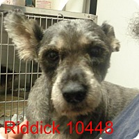Adopt A Pet :: Riddick - baltimore, MD