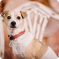 Adopt A Pet :: Honey Girl - Portland, OR