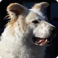 Adopt A Pet :: Lincoln (Skeeter) - Oakley, CA