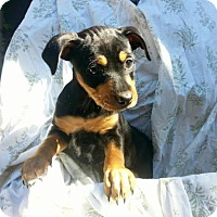 Adopt A Pet :: Mississippi - Austin, TX