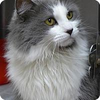 Adopt A Pet :: Petco Kitty - Batavia, NY