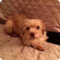 Adopt A Pet :: GiGi - Beavercreek, OH
