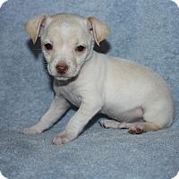 Adopt A Pet :: Boris - Henderson, NV