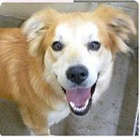 Adopt A Pet :: Sophie - Springdale, AR