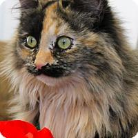 Adopt A Pet :: Feather - Buffalo, WY