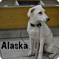 Adopt A Pet :: ALASKA - Calgary, AB