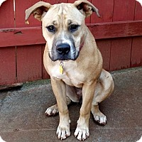Adopt A Pet :: Marley - Lawrenceville, GA