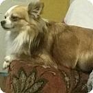 Adopt A Pet :: Wolfie