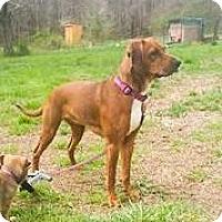Adopt A Pet :: Mercy - Coeburn, VA
