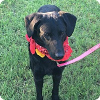 Adopt A Pet :: Jake aka Vidor - White Settlement, TX