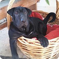 Adopt A Pet :: Jetta - New Oxford, PA