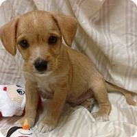 Adopt A Pet :: Windsor (ARSG) - Santa Ana, CA