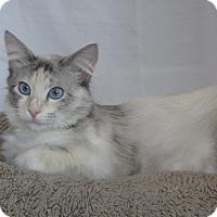 Adopt A Pet :: Kai - Ridgway, CO