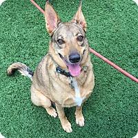 Adopt A Pet :: Libby - Scottsdale, AZ