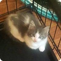 Adopt A Pet :: Breeze - Savannah, GA