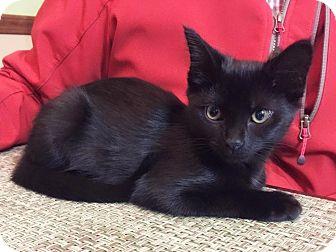 Cat Rescue Xenia Ohio