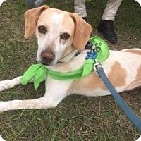 Adopt A Pet :: Sweetie - Loxahatchee, FL