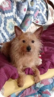 Terrier (Unknown Type, Medium) Mix Dog for adoption in Akron, Ohio - Jax