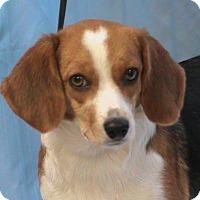 Adopt A Pet :: Dixie - Maynardville, TN