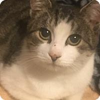 Adopt A Pet :: Bella - Mount Laurel, NJ