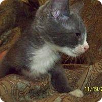 Adopt A Pet :: Ciel - Kenner, LA