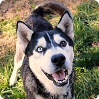 Adopt A Pet :: Stryker - Youngsville, NC