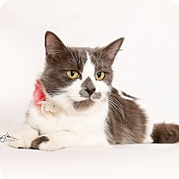 Adopt A Pet :: Sarabi - Riverside, CA