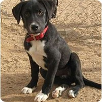 Adopt A Pet :: Kayla - Golden Valley, AZ