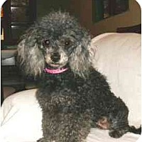 Adopt A Pet :: Sylvie - Mooy, AL