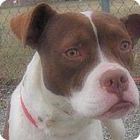 Adopt A Pet :: Piper - Trenton, NJ