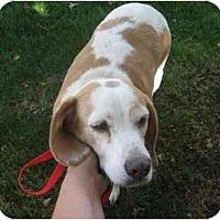 Adopt A Pet :: Hildie - Phoenix, AZ