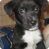 Adopt A Pet :: Benita(ADOPTED!) - Chicago, IL