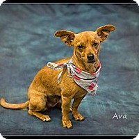 Adopt A Pet :: Ava - Wickenburg, AZ