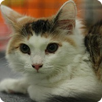 Adopt A Pet :: Applesauce - Sacramento, CA