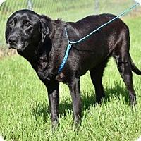 Adopt A Pet :: Cinder - New Canaan, CT